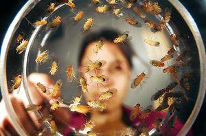 Способы избавления от мух
