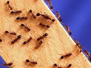 Метод избавления от муравьев