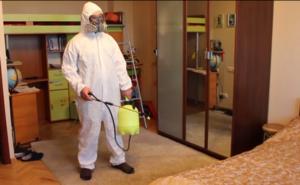 Откуда появляется мошка в квартире и каким способом можно вывести ее из дома