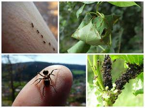Причины появления муравьёв в частном доме и как от них избавиться